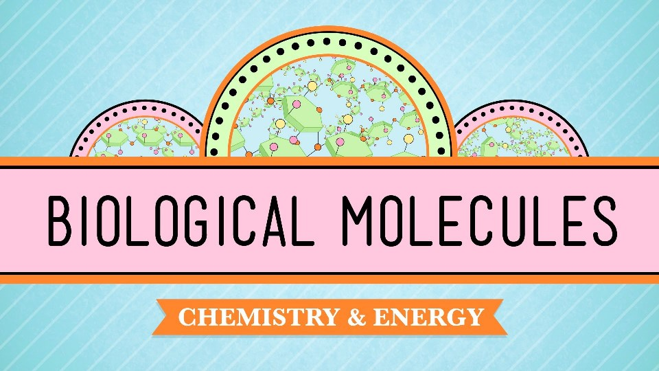 What is Biological Molecules